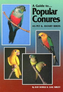 A guide to Popular Conures