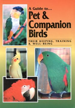 A Guide to Pet & Companion Birds